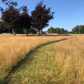 Bewl-Rookery-Field