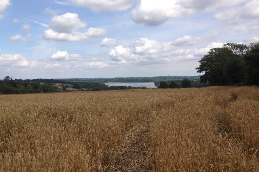 Bewl Water nearby hayfields