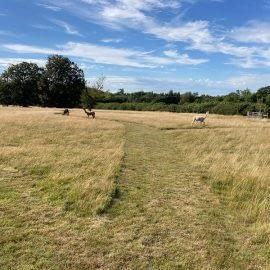 Meadow-with-alpacas
