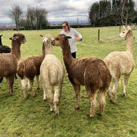 lunch-with-our-alpacas-2-4