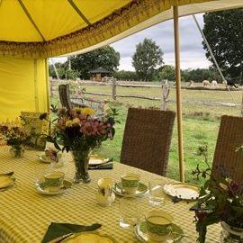 tea-with-our-alpacas-1-4